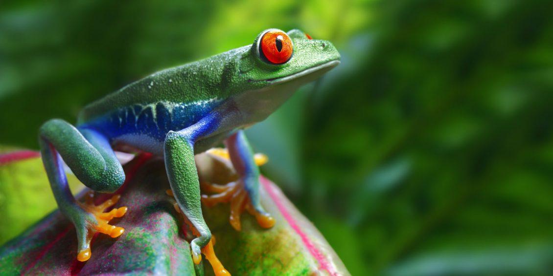 Costa Ricas faszinierende Tierwelt
