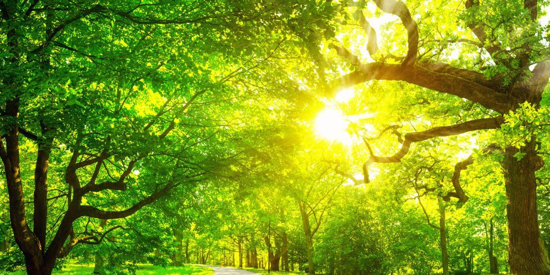Märchenhafte Wälder: Daintree Forest, Redwood State Park und Mangrovenwald