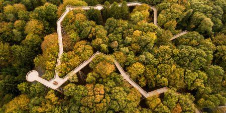 Hoch hinaus: Deutschlands traumhafte Baumwipfelpfade