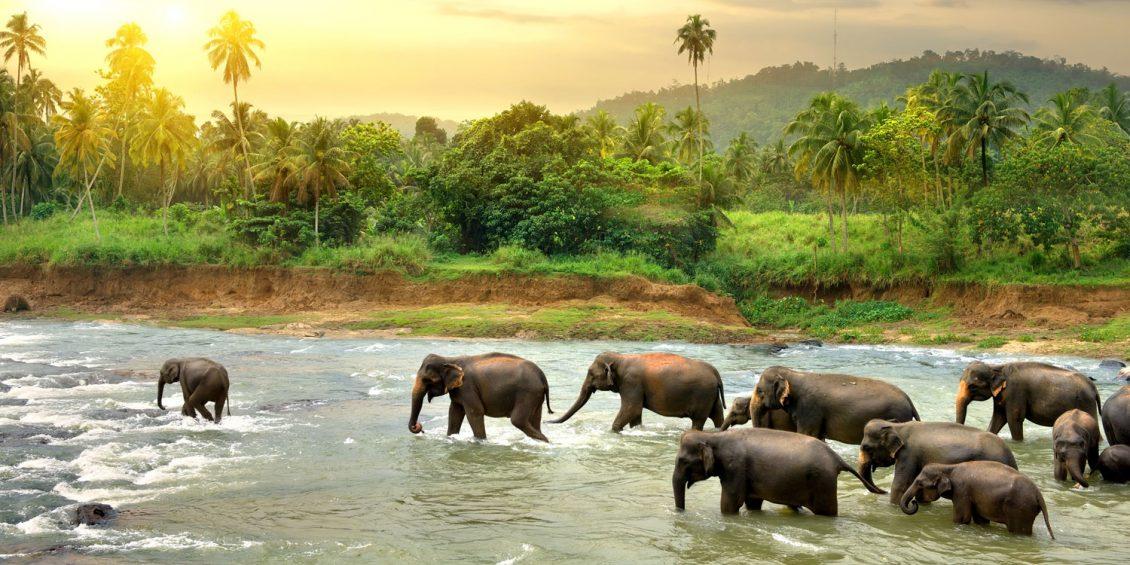 Sri Lanka: Tempel, Teeplantagen und Strand
