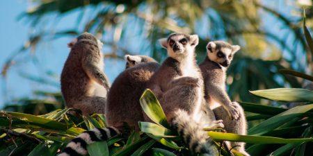 Madagaskar: Im Land der Lemuren