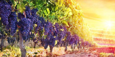 Andalusien, Bordeaux, Mosel: Europas schönste Weinregionen