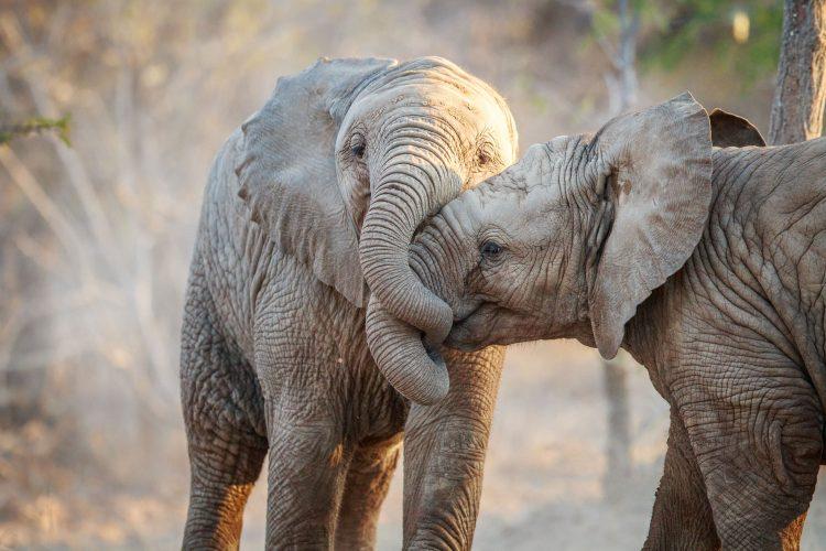 Nicht alle Organisationen kümmern sich um das Wohlergehen der Tiere