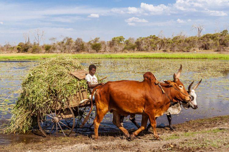 Bauer auf Madagaskar