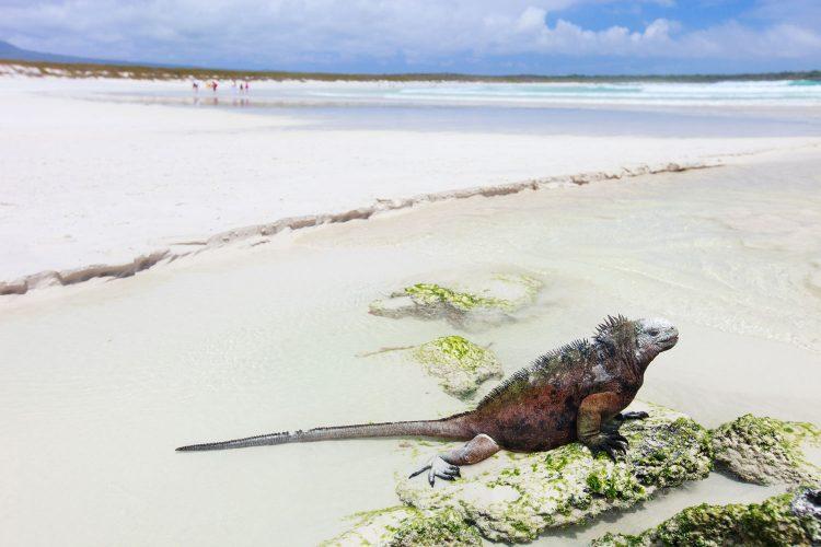 Galapagos-Beach, Santa Cruz, Ecuador