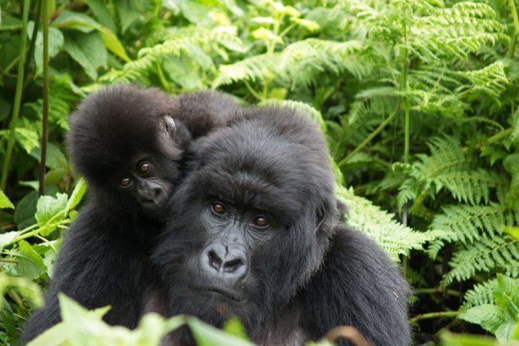 Am besten kann man Tiere in der Wildnis beobachten