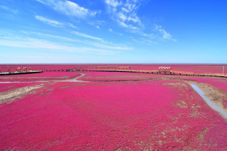 Der rote Strand von Panjin