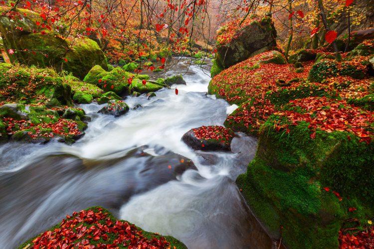 Fluss durch die herbstliche Eifel