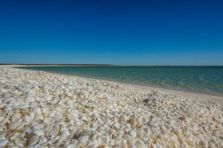 Zahlreiche Muscheln am Shell Beach in Australien