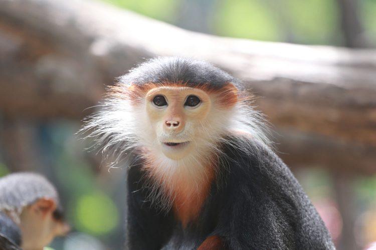 Wilde Tiere wie Affen können Tollwut übertragen