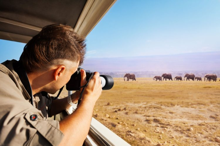 Distanz ist die Grundregel beim Beobachten von Wildtieren