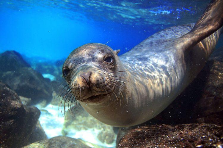 Beim Schnorcheln auf den Galapagos-Inseln ist man immer in Gesellschaft