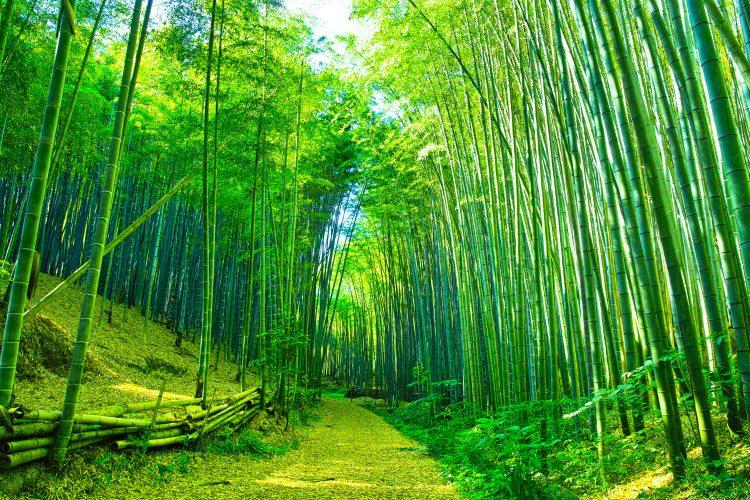 Magischer Bambuswald