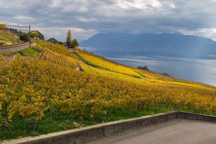 Weinberge von Lavaux
