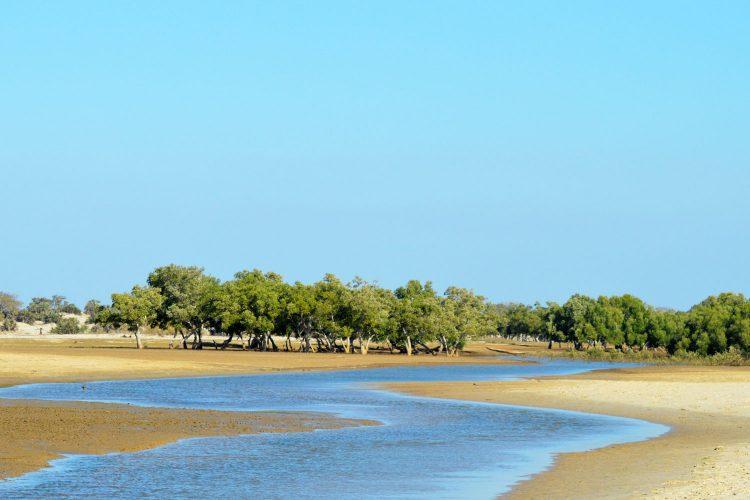 Mangroven auf Madagaskar