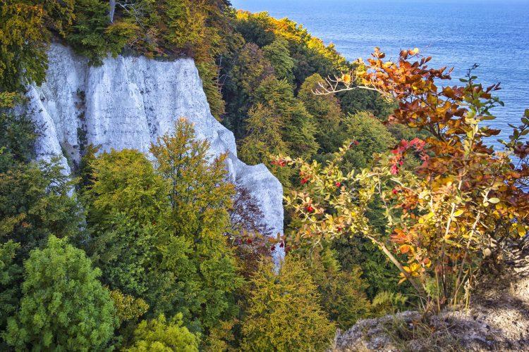 Herbst auf den Kreidefelsen