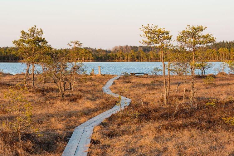 Moorlandschaft in Estland