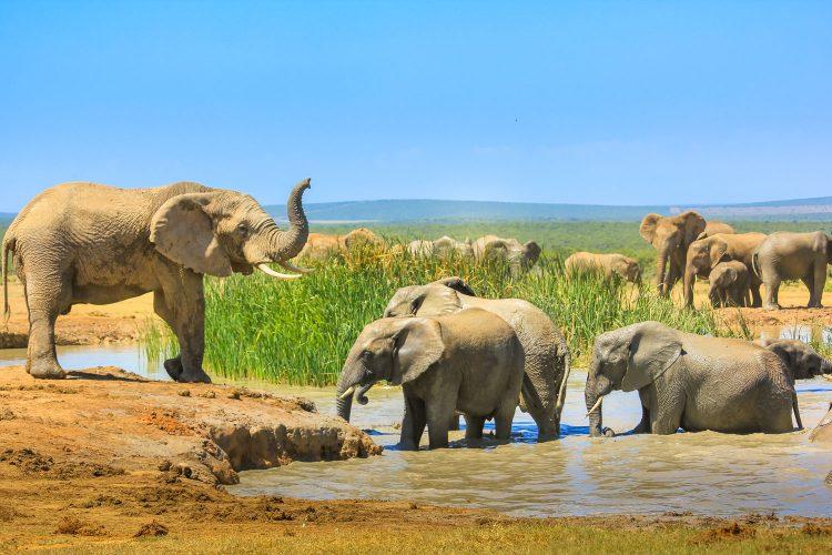 Elefanten kann man beim Big Five Marathon durchaus begegnen