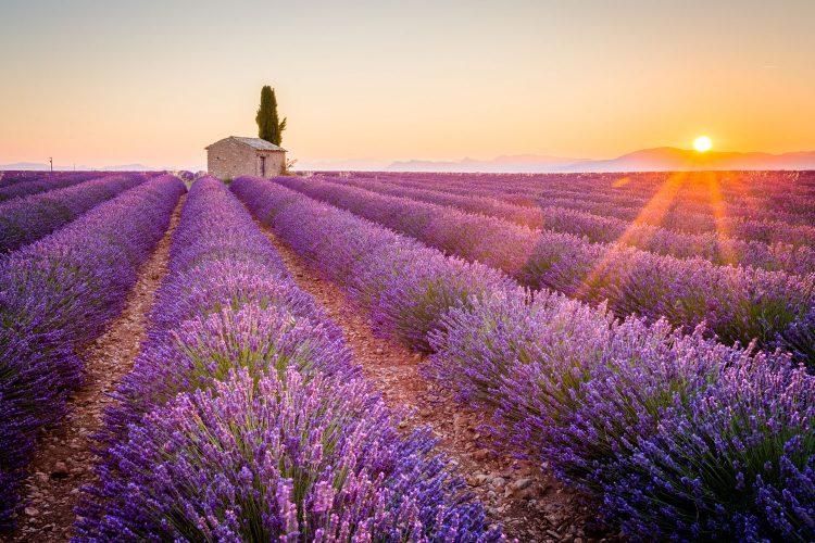 Besonders schön, wenn der Lavendel blüht: Tour durch die Provence