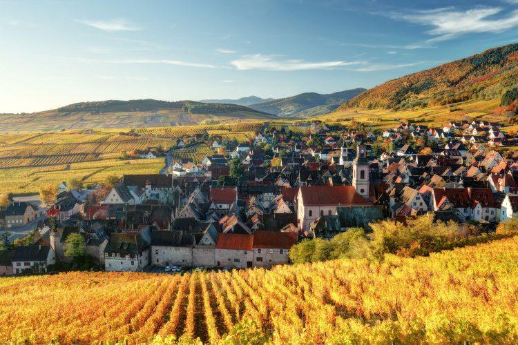 Dorf im Elsass inmitten von Reben