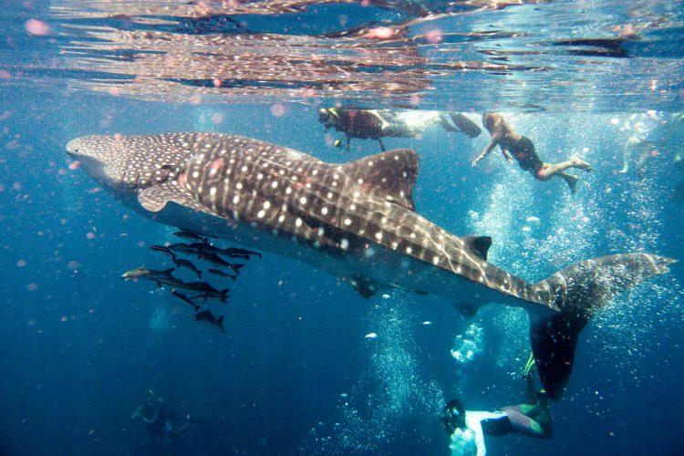 Auch im Meer gilt: Distanz zu den Riesen!