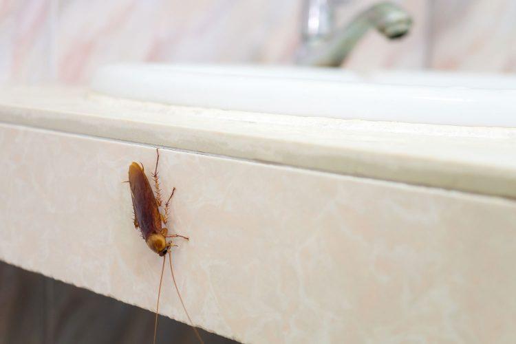 Kakerlaken im Hotelzimmer? Unbedingt per Foto belegen!