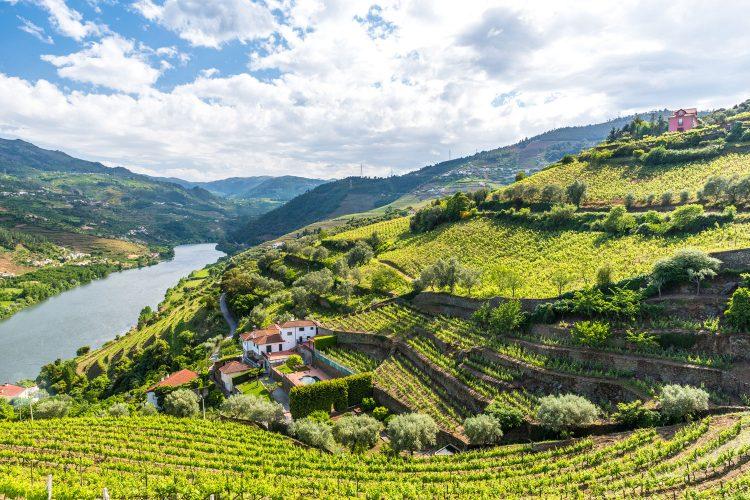 Landschaft des Douro