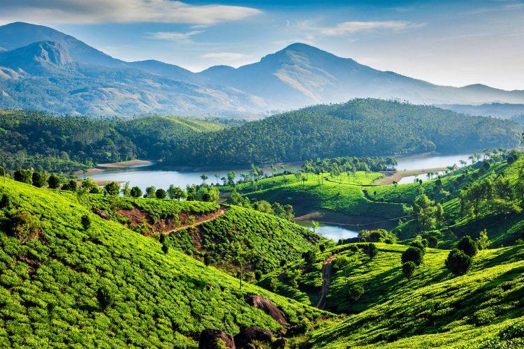 Teeplantagen in Kerala