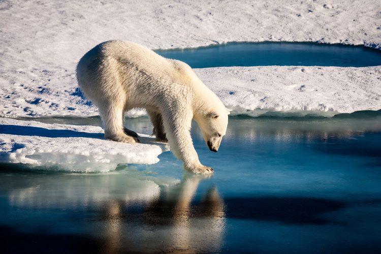 Nachhaltige Tierabenteuer setzen sich für den Erhalt des Lebensraums der Tiere ein